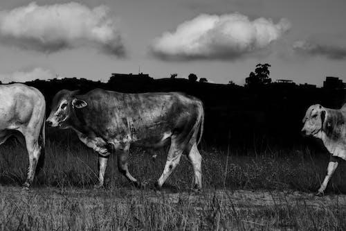 คลังภาพถ่ายฟรี ของ สัตว์, อาณาจักรสัตว์
