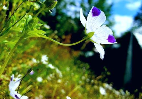 Free stock photo of blue sky, dot, flower, garden
