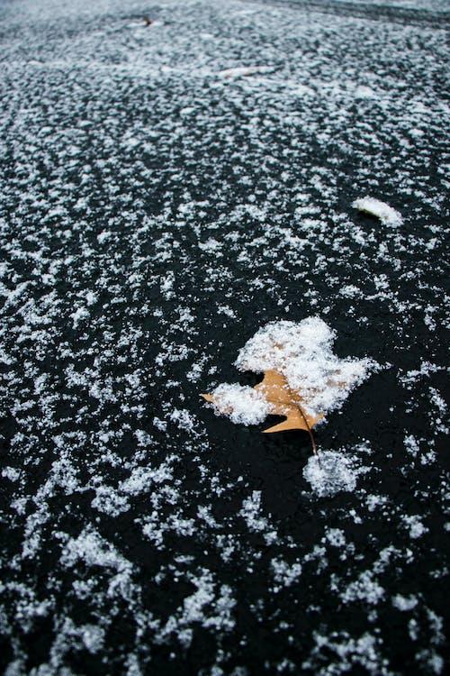 Бесплатное стоковое фото с лист, минимализм, осенние листья, осень