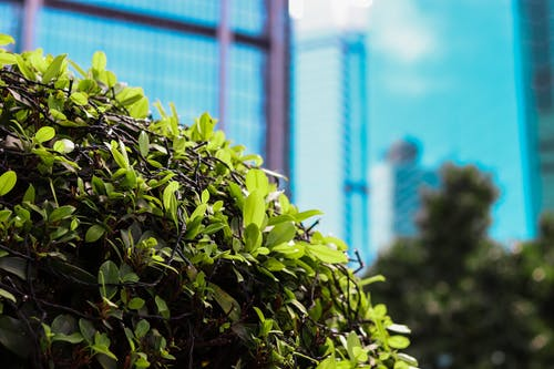 Free stock photo of building, bushes, city, city life