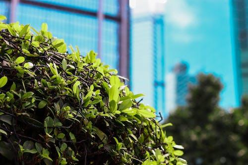 Бесплатное стоковое фото с город, городская жизнь, городской парк, здание