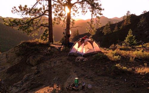 Tent Near Tree