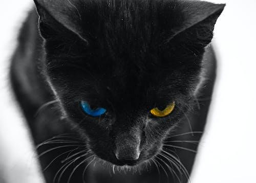 Imagine de stoc gratuită din Adobe Photoshop, animal, cap de animal, fotografie de animale