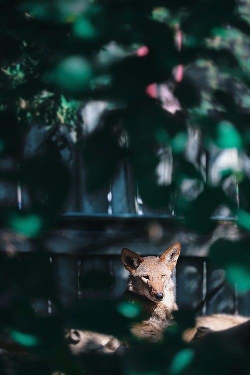 Foto stok gratis alam, anjing, berbayang, berdarah murni