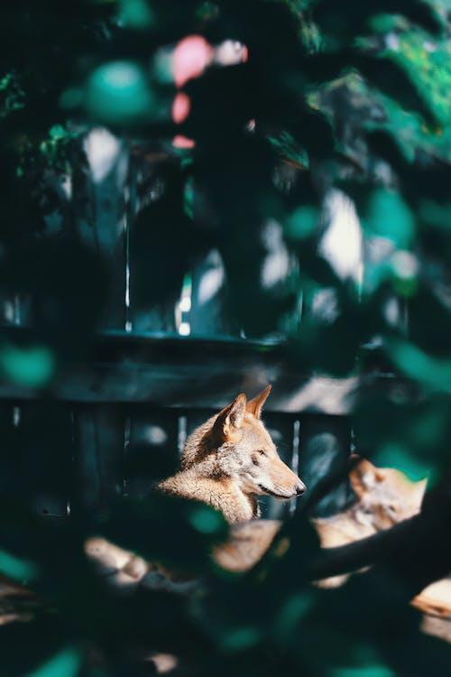 Foto stok gratis alam, binatang, keindahan di alam, Kerajaan hewan