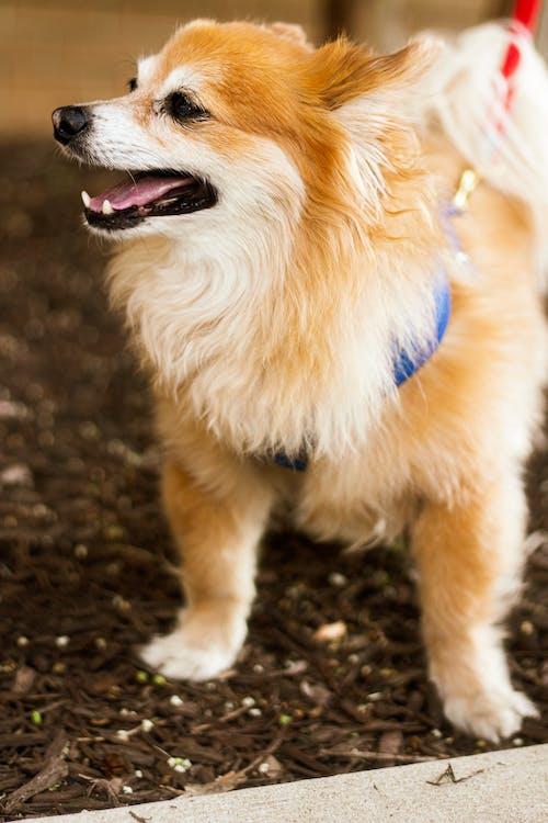 Fotobanka sbezplatnými fotkami na tému pes