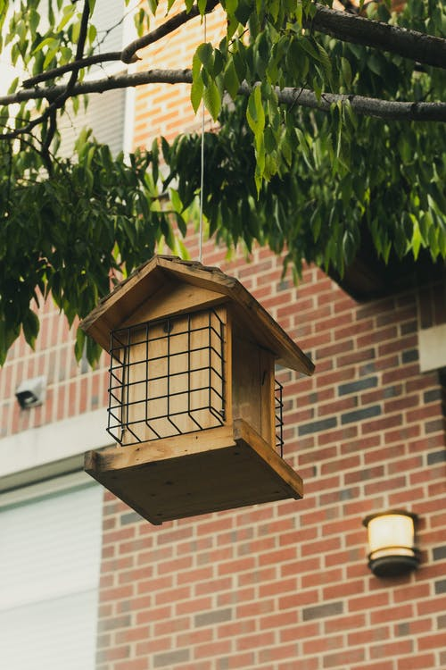 Low-angle Photo of Hanging Birdhouse on Tree