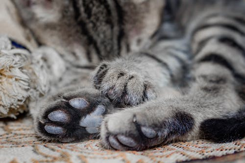 Close-Up Photo of Cat's Paws