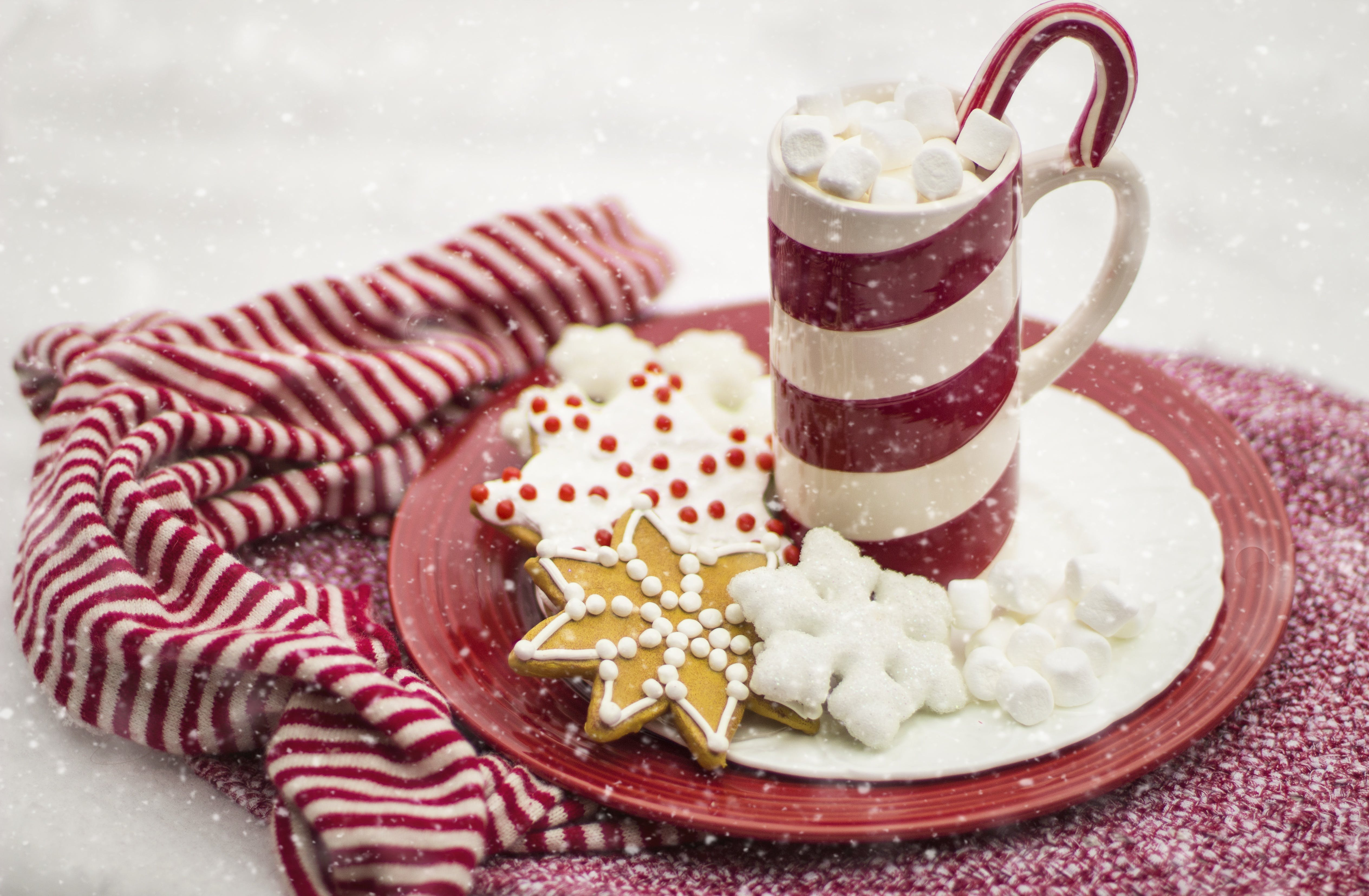 Hot Chocolate With Marshmallows and Cookies on Plate ...