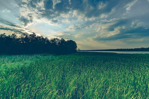 Photos gratuites de arbres, champ de blé, ciel, clairière