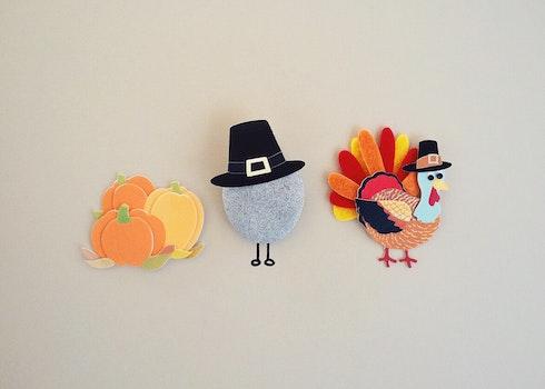 Free stock photo of holiday, season, turkey, Thanksgiving