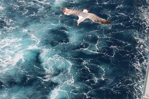 Ilmainen kuvapankkikuva tunnisteilla lintu, lokki, meri, valtameri