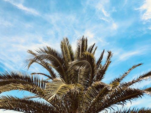 Бесплатное стоковое фото с дерево, дневной свет, листья, небо