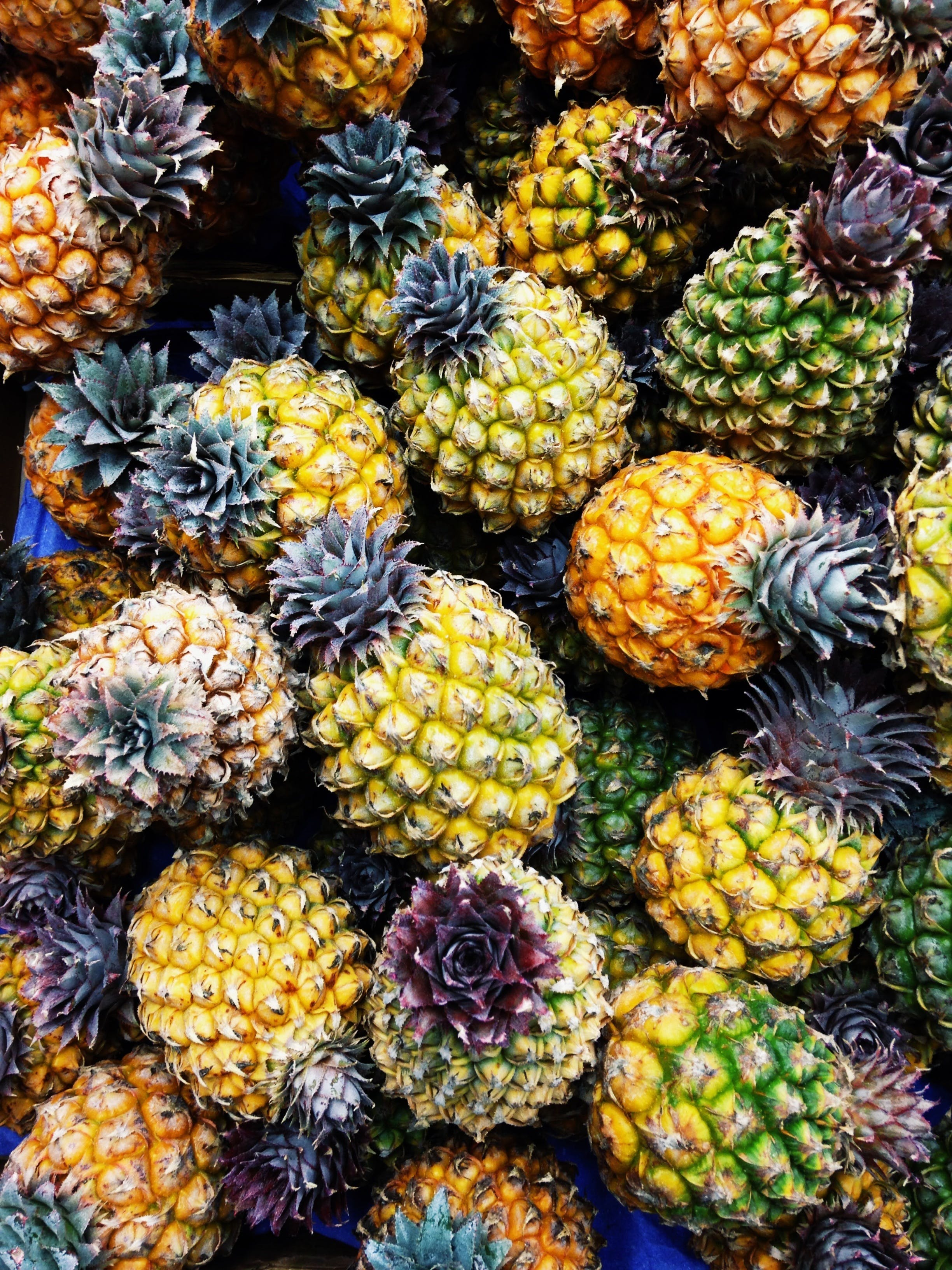 Free stock photo of italy, pineapple, vacation
