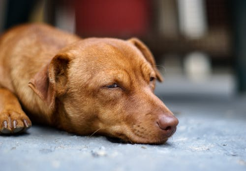 Close-Up Photo of Dog Resting