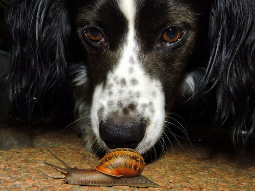 Brown Snail Beside Dog