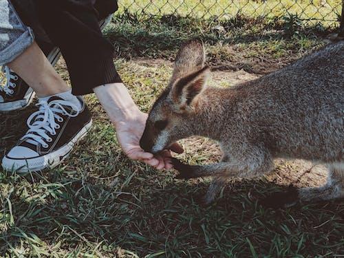 Foto profissional grátis de alimentando, animais selvagens, animal, animal selvagem