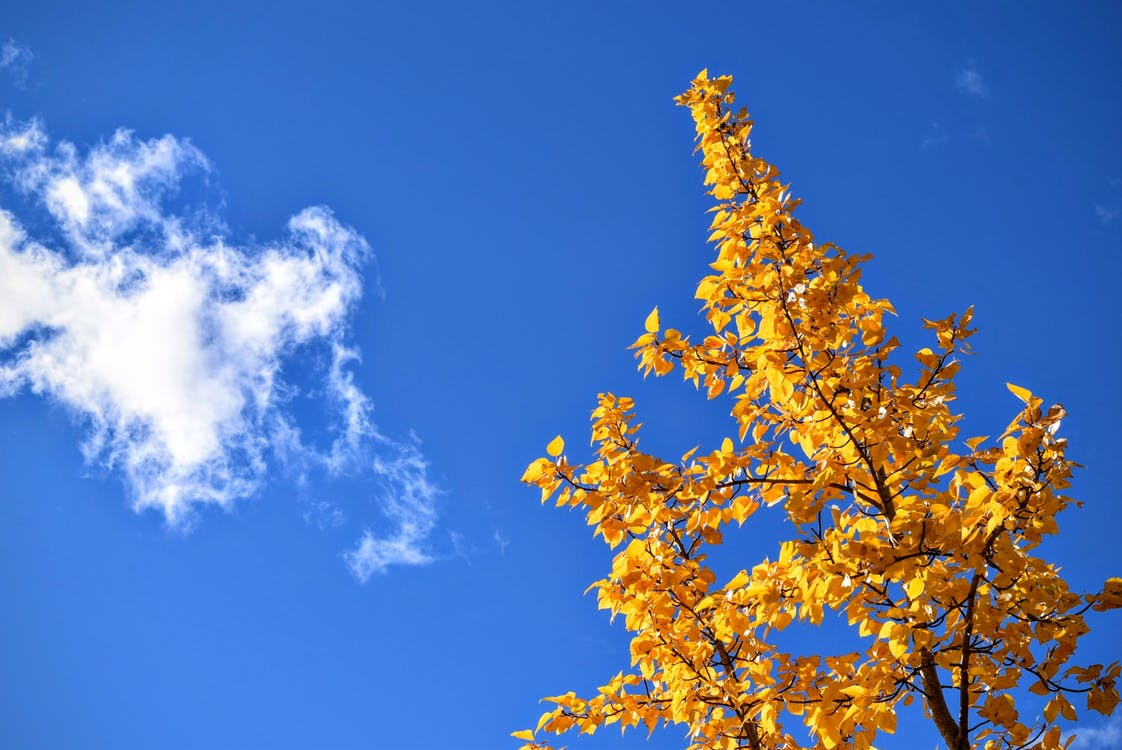 Yellow Petaled Plant Under Clouded Sky