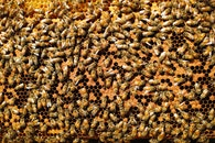 company, bees, nature background