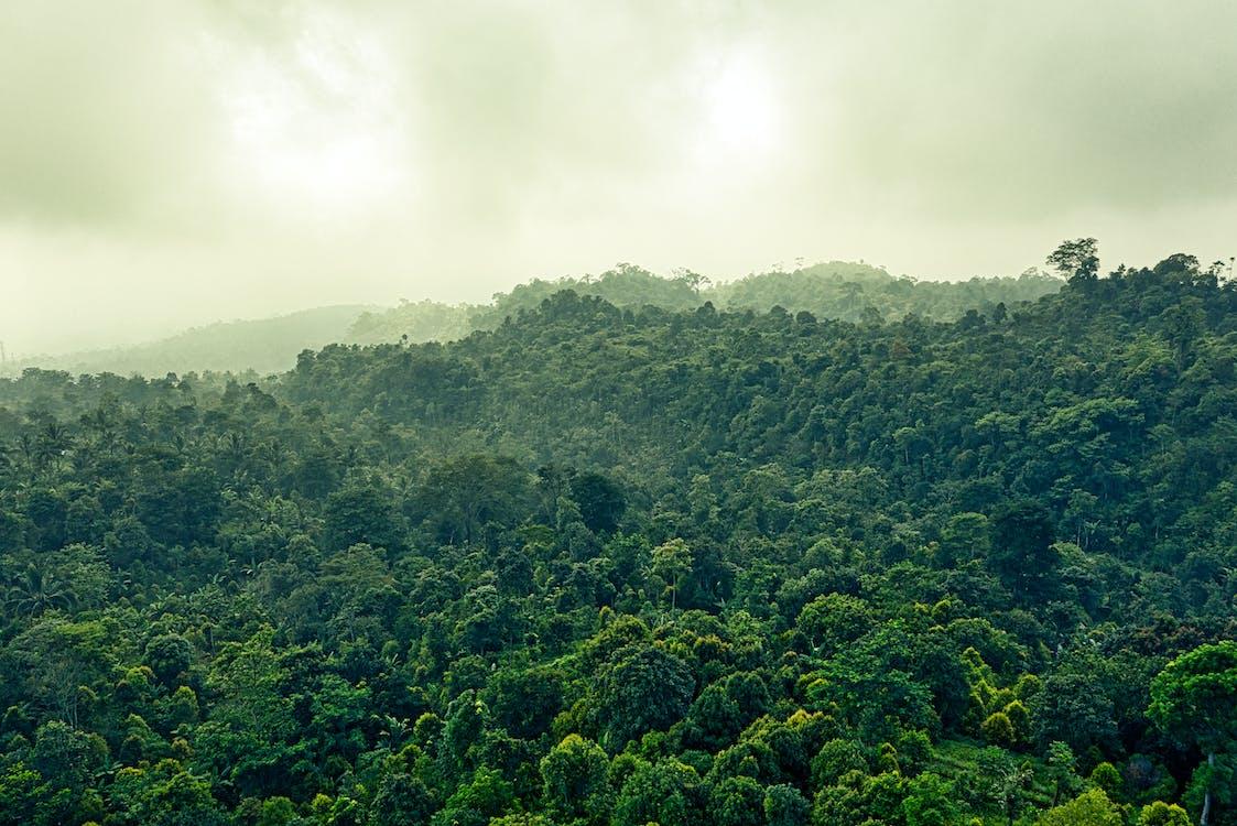 Hutan Hujan di Indonesia Merupakan Ekosistem dengan Biodiversitas yang Sangat Tinggi