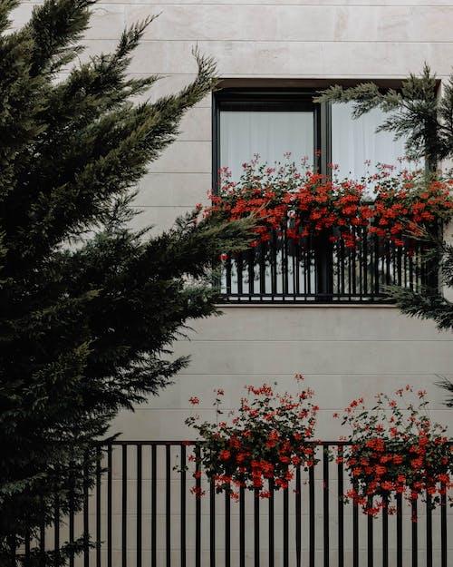 Безкоштовне стокове фото на тему «вікно, віконні рейки, дім, екстер'єр»