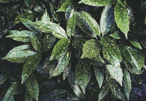 Darmowe zdjęcie z galerii z liście, natura, ogród, roślina