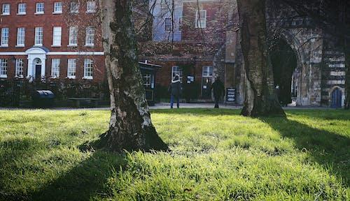 Gratis stockfoto met bomen, gras, grasland, groen gras