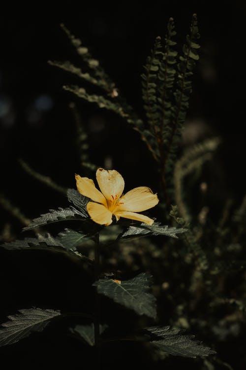 Yellow Petaled Flower Selective Focus