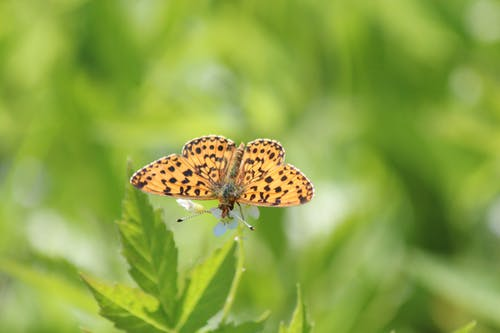 나비, 낮, 동물, 섬세한의 무료 스톡 사진