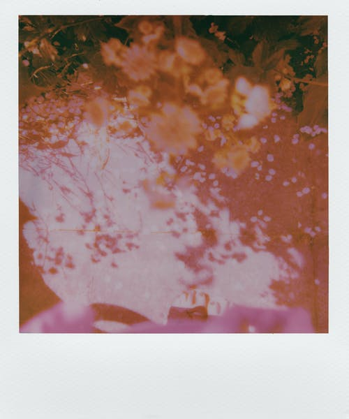 Polaroid Photo of Flowers