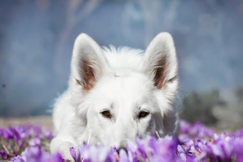 Free stock photo of cutedog, dog, dog love, flower