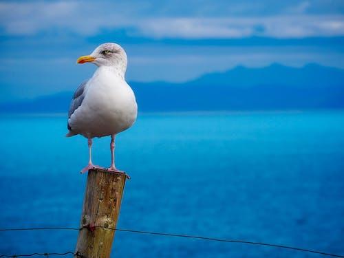Photographie De Mise Au Point Sélective De Seagull Perché Sur Une Clôture En Bois