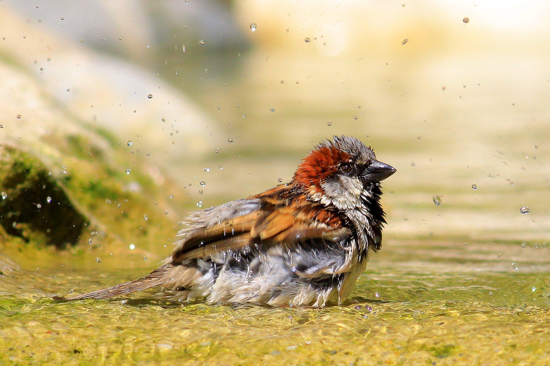 Selective Focus Photography of Bird