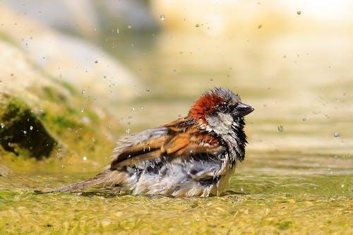 Безкоштовне стокове фото на тему «вода, оперення, пір'я, птах»