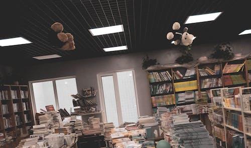 서점, 초현실적인, 테디베어의 무료 스톡 사진
