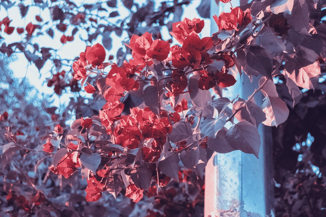 ánh sáng ban ngày, cánh hoa, chi nhánh