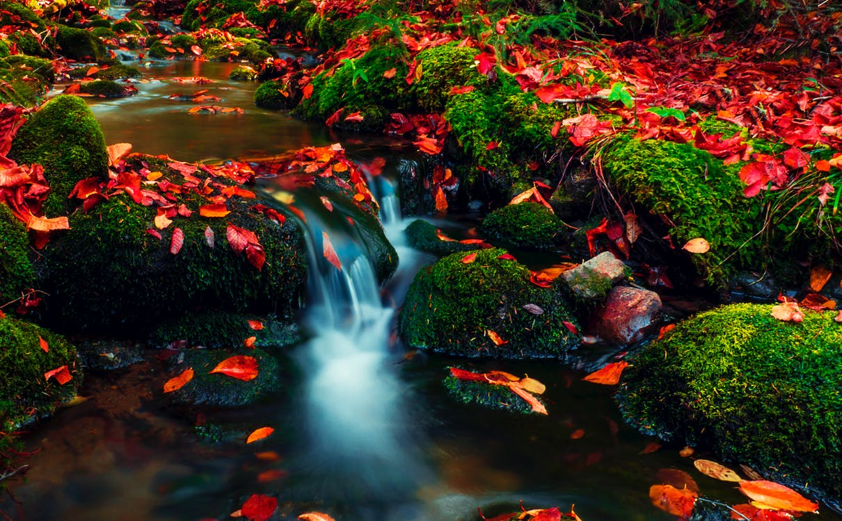 Long-exposure Photography of a Stream