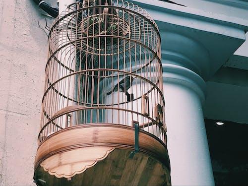 #鳥の無料の写真素材