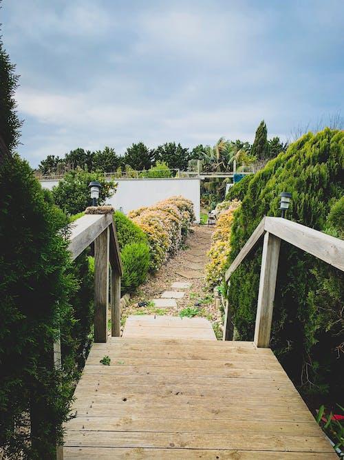 Ilmainen kuvapankkikuva tunnisteilla asfaltoitu polku, jalkakäytävä, kasvit, kulkureitti