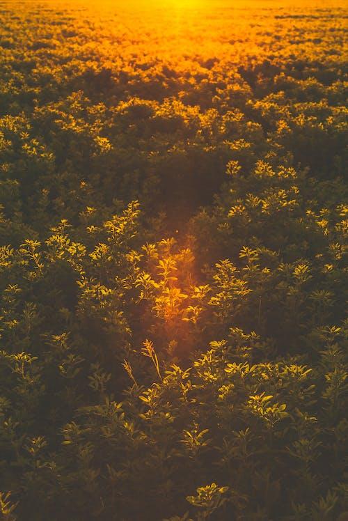 Gratis lagerfoto af fugleperspektiv, grøn, gylden time, luftfoto