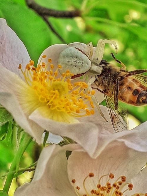 Foto stok gratis #alam, #arachnid, #macro, #manusia laba-laba