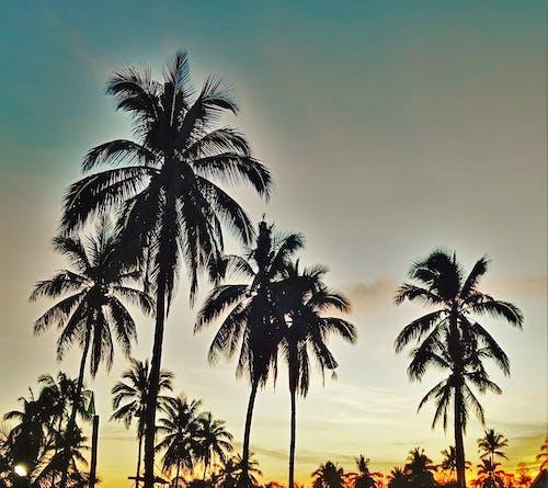 Ilmainen kuvapankkikuva tunnisteilla auringonlasku, kauneus luonnossa, luonto, luonto tausta