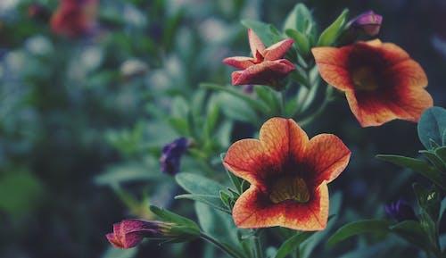 Gratis stockfoto met bloeiende planten, bloemachtig, bloemen, close-up