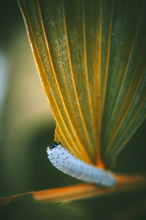Macro Photography of White Caterpillar