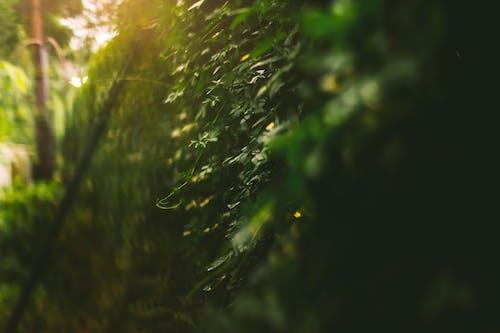 ゴールデンアワー, フレア, 秋の無料の写真素材