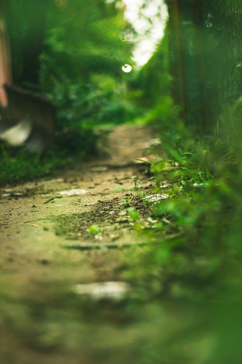 ブロードウェイ, 交差点, 泥, 雨上がりの無料の写真素材