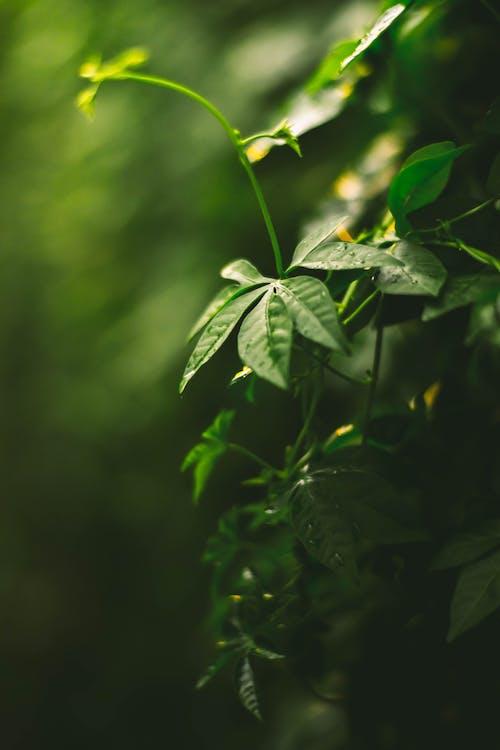 濃い緑色, 紅葉, 落ち葉, 葉の無料の写真素材