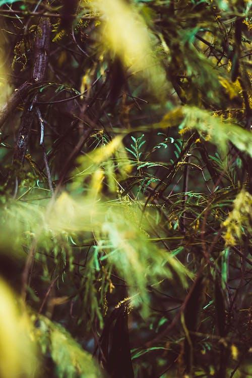 クラウドフォレスト, シュヴァルツヴァルト, 秋の気分の森の無料の写真素材