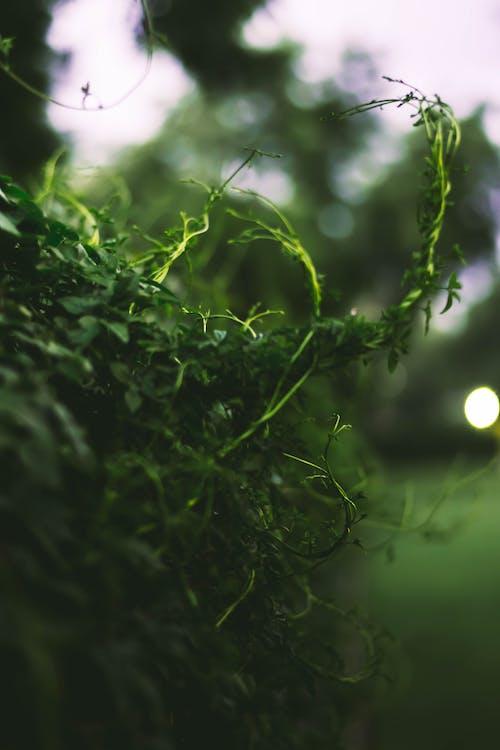 濃い緑色, 秋の気分の森, 紅葉の無料の写真素材