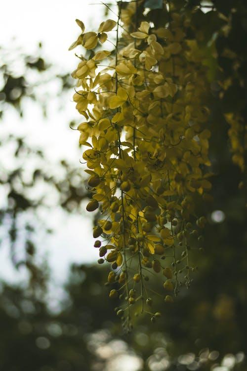 ムーディー, 秋の色, 美しい花, 色の無料の写真素材